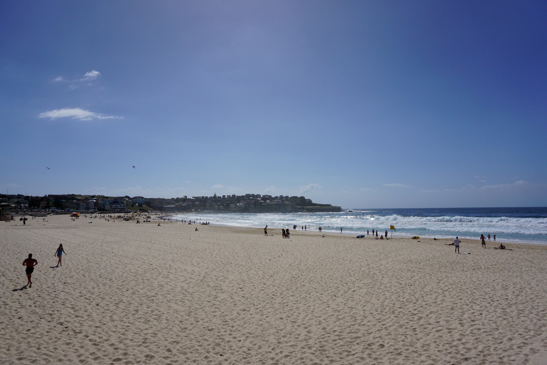 Bondi Beach and Surrounds Image 5